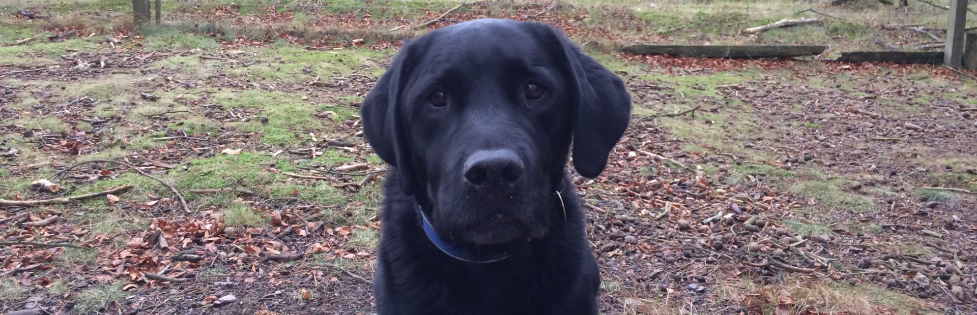 Gluten free by necessity, Dodgy Knees, Nurse, Blogger, Parkrunner, Bromptoneer Filofaxer Black lab owner (or does he own me?)
